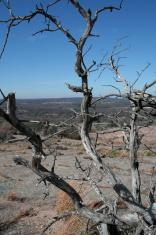 Tree of Solitude