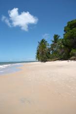 Desert beach ( Brazil)