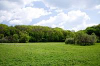 Forest spring landscape