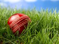 cricket ball in grass