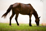 Horse in Paraty, Brasil