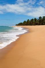 Tropical beach (Brazil)