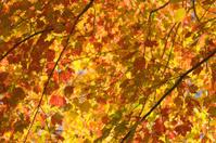 Autumn Arbor