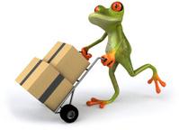 Fun frog moving