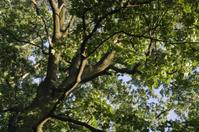 Tree Canopy Background