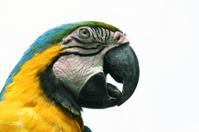 Parrot in Ecuador