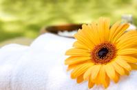 Spa Nature Wellness