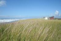 Dune grass near the ocean