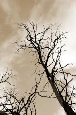 creepy sepia tree
