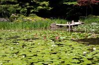 Japanese Koy Pond and Garden