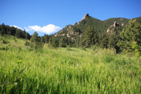 grassy hillside and peak