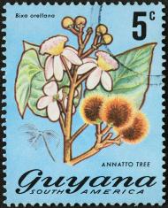 annatto tree flower