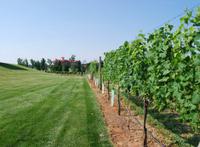 Vineyard and hotel