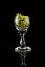 Glass full of chestnut
