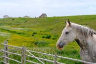 Horse in a rural scene