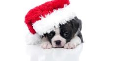 Christmas Puppy Series