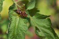cicada killer on plant leaf