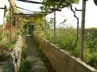 Noli - Liguria