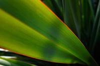 Sunlight on a flax leaf