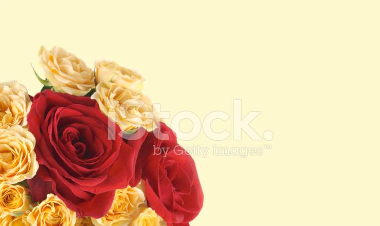 Sfondo Con Una Rosa Fotografie Stock Freeimagescom