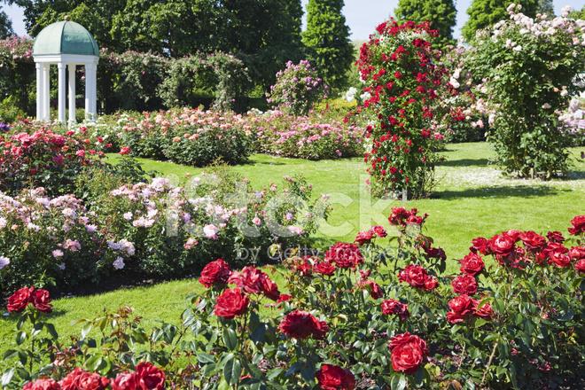 Giardino di rose xxxl fotografie stock freeimages