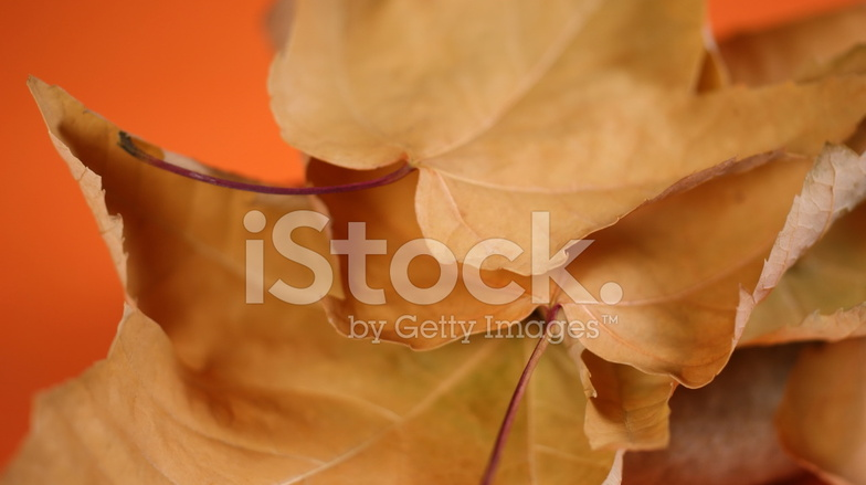 Val achtergrond van warme kleuren stockfotos freeimages.com