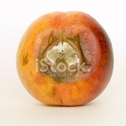 10598279-rotten-apricot.jpg