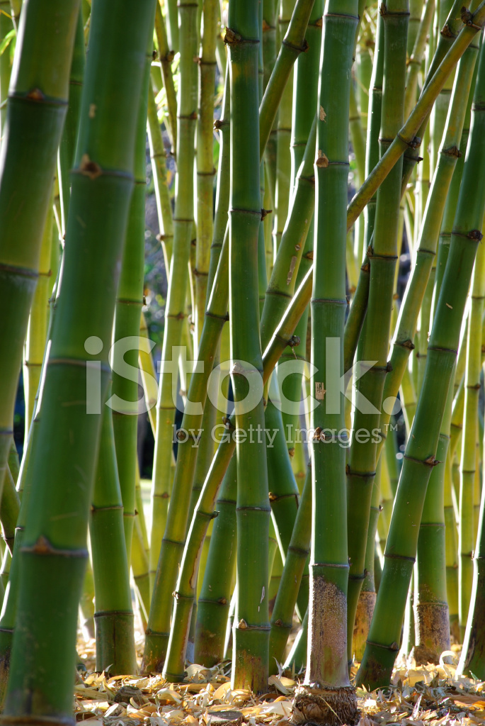 The Use Of Bamboo In East Asian Culture And Nature