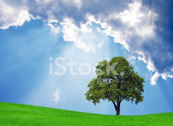 Doğal Doğa Arka Plan Stok Fotoğrafları Freeimagescom