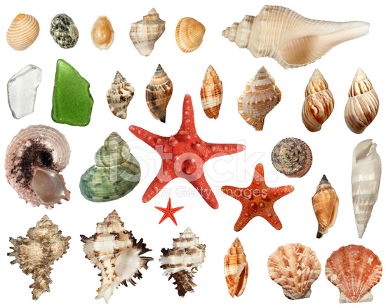 sea beach objects stock photos freeimages com free starfish clip art pictures free starfish clipart images