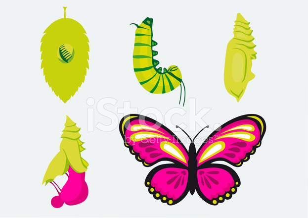 metamorphosis caterpillar into butterfly stock vector freeimages com rh freeimages com Monarch Caterpillar Clip Art Realistic Caterpillar Clip Art
