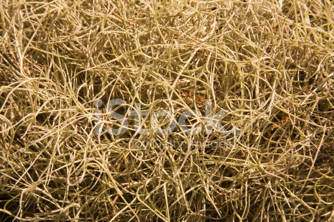 Southeastern Us: Spanish Moss Close UP Stock Photos ...