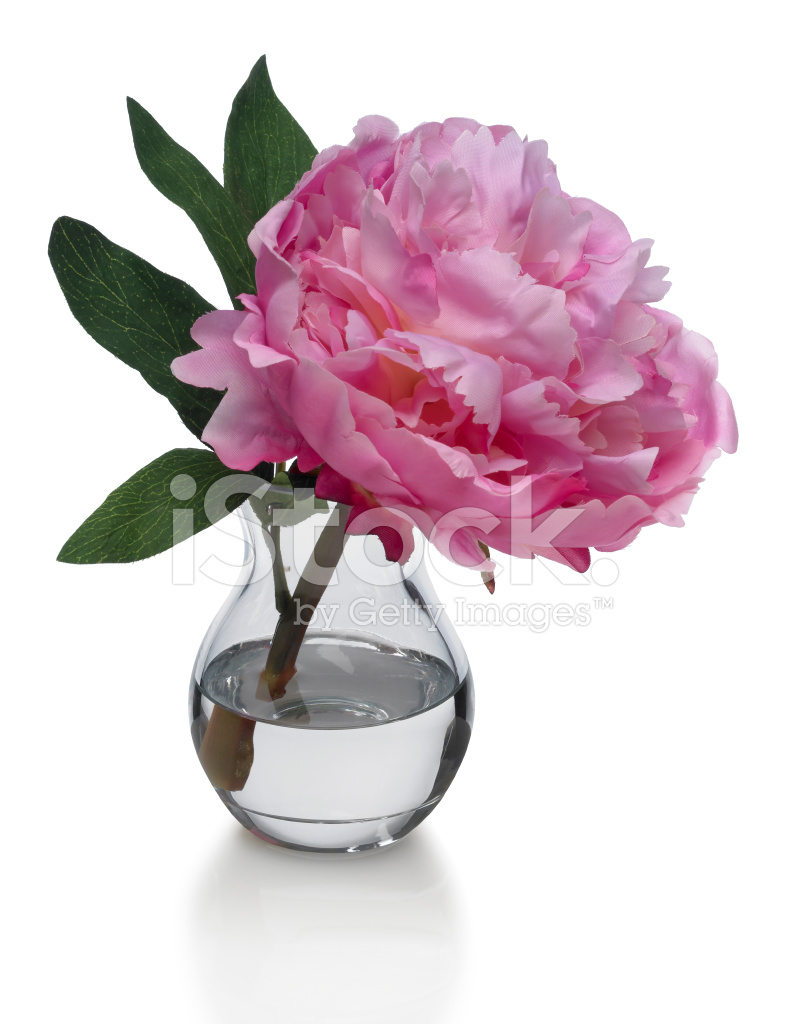 Single Pink Peony In Vase On White Background Stock Photos
