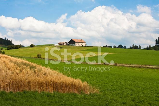 阳光 牧场 天空 树 晴朗天空 绿色的颜色 家园 家庭生活 人工林的房子
