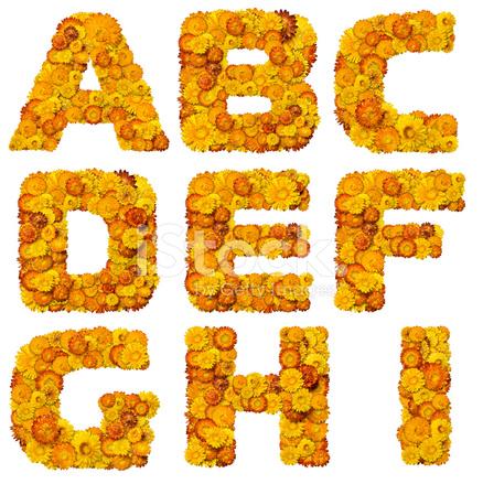 Fiori Gialli E Arancioni.Alfabeto Da Fiori Gialli E Arancioni Fotografie Stock Freeimages Com