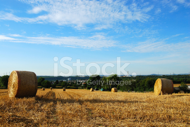 premium stock photo of hay field with round haystacks