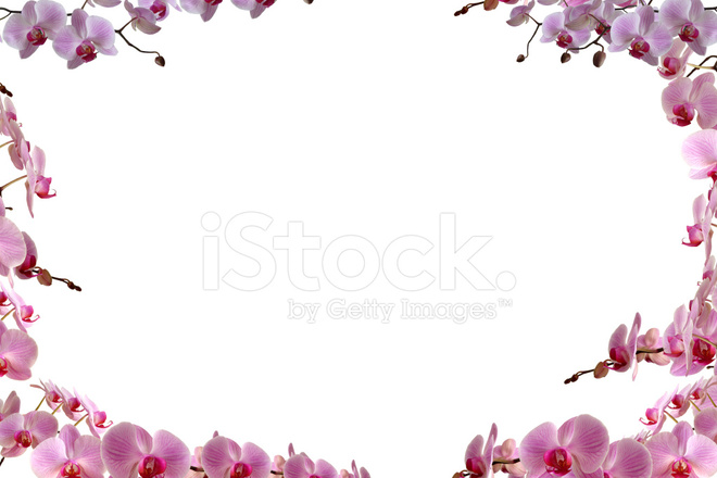 orchids border stock photos freeimages com Free Clip Art Laughing Free Summer Clip Art