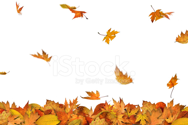Fall Cake Leaves Falling