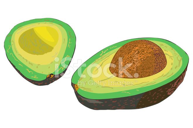 Avocado Vector