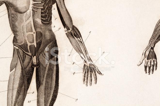 Grabado DE Anatomía Fotografías de stock - FreeImages.com