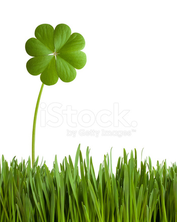 Four leaf clover game