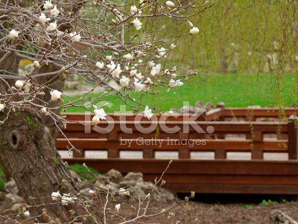 Japanese style bridge and magnolias stock photos for Japanese style bridge