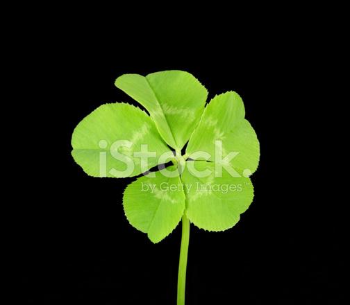 Five Leaf Clover Stock Photos