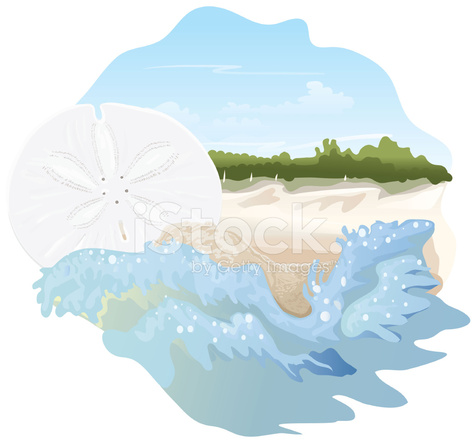 Sand Dollar On The Beach Stock Vector Freeimagescom