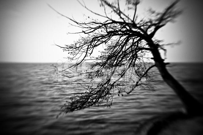 Sfondi mare in bianco e nero
