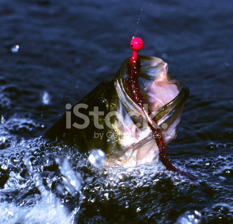 Tageshoroskop Fische ⇒ das erwartet Sie heute - WEBDE