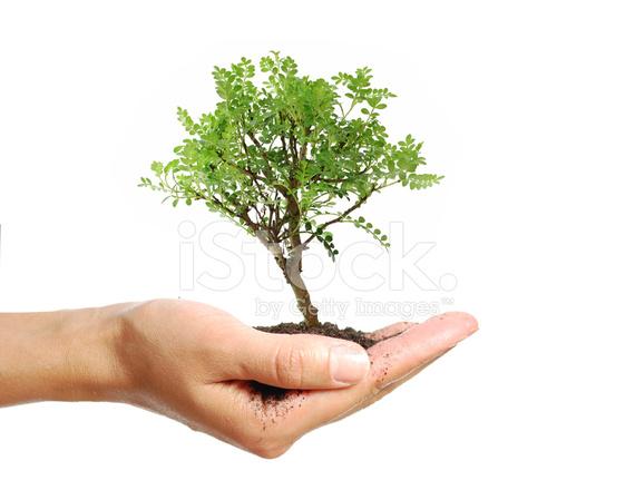small tree stock photos freeimages com