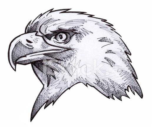 Bosquejo Del Águila Calva Fotografías de stock - FreeImages.com