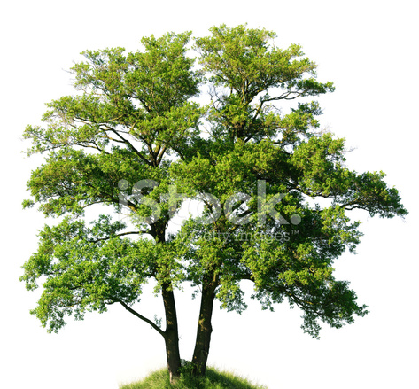 Yeoldefabricshoppe blogspot furthermore 242631498647196868 additionally Old Alder Tree Isolated On White Alnus Glutinosa Huge Resolut 429607 furthermore La Defense Unique Business District in addition Shopping Morocco 354046159. on old fabric