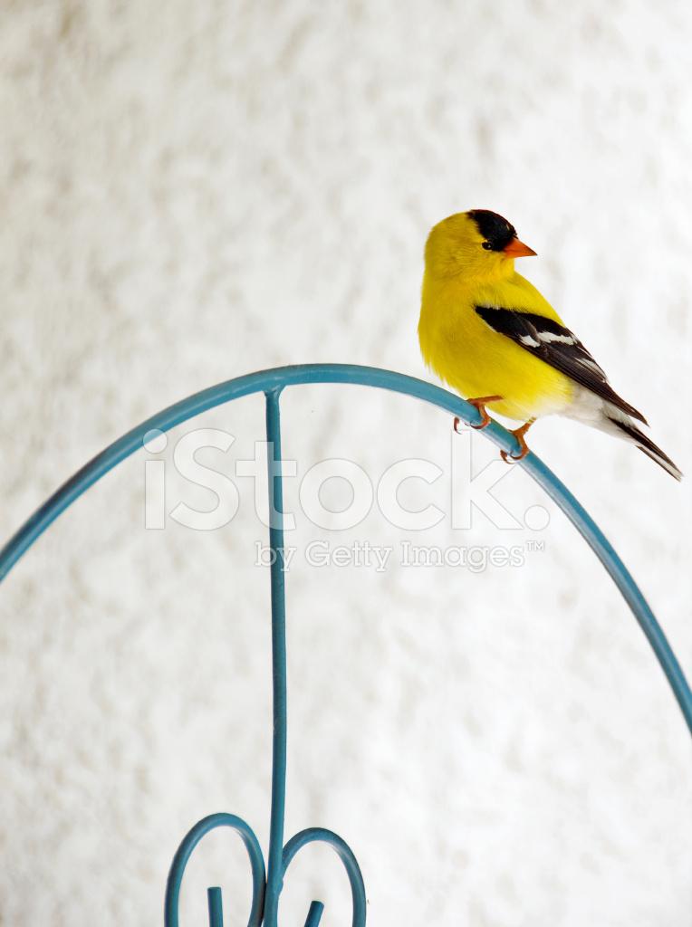 Goldfinch Paint Color